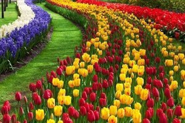 Kashmir Tulip Trip April